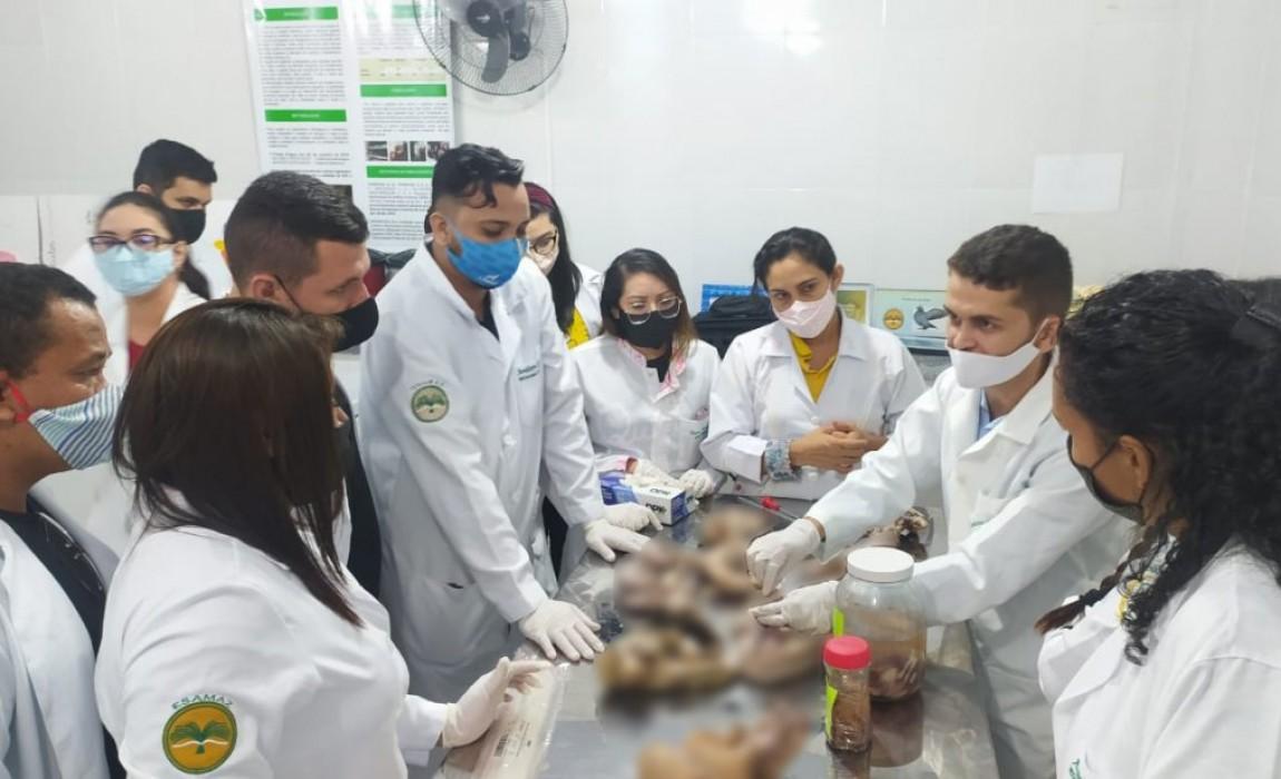 Alunos de Medicina Veterinária da Esamaz têm aula sobre Manejo reprodutivo
