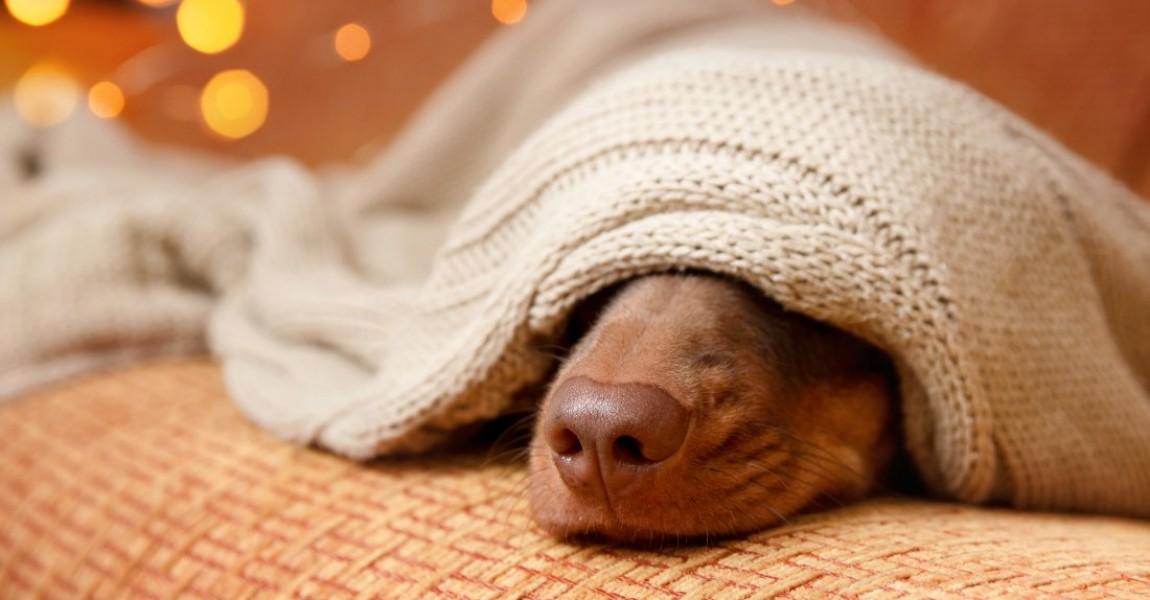 Proteja seu Pet do barulho dos fogos de artifício do Final de Ano