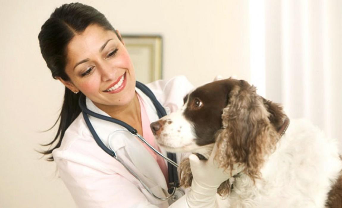 Esamaz abre inscrições para o curso de Medicina Veterinária